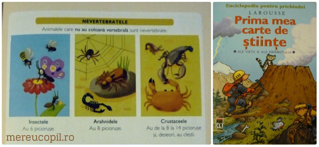 enciclopedie_spider